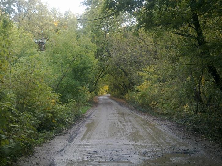 в раньше здесь была широкая дорога, деревья подстригали