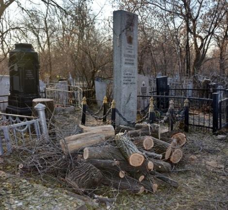 к могиле Героя Советского Союза Александра Новикова свезли опиленные деревья, похожие на дрова