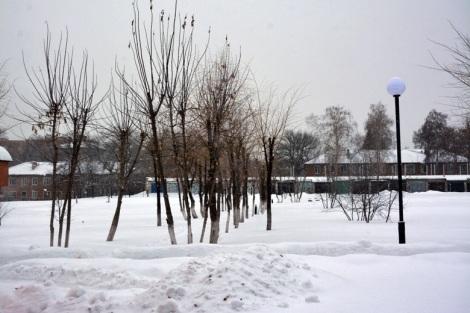 деревья грамотно подрезаны