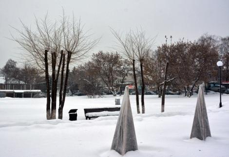 елочки на зиму укрыты