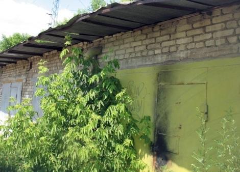 входы в гаражи заросли лесом